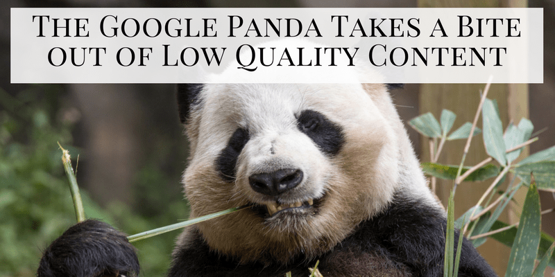 Google Panda Takes a Bite out of Low Quality Content